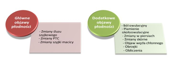 objawy_plodnosci